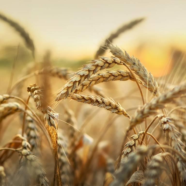 Lustucru – La Fabrique – Le blé complet